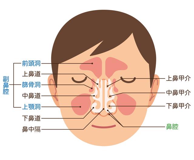 鼻 が ツーン と する 痛い 鼻がツーンとする原因と対処法 -