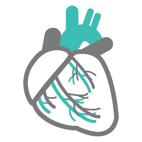 心臓・血液