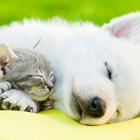 犬猫フィラリア予防と混雑時期