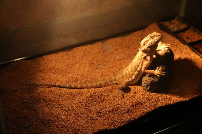 Bar Lizard(バー リザード)_3