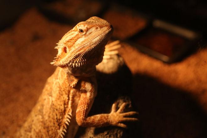 Bar Lizard(バー リザード)_6