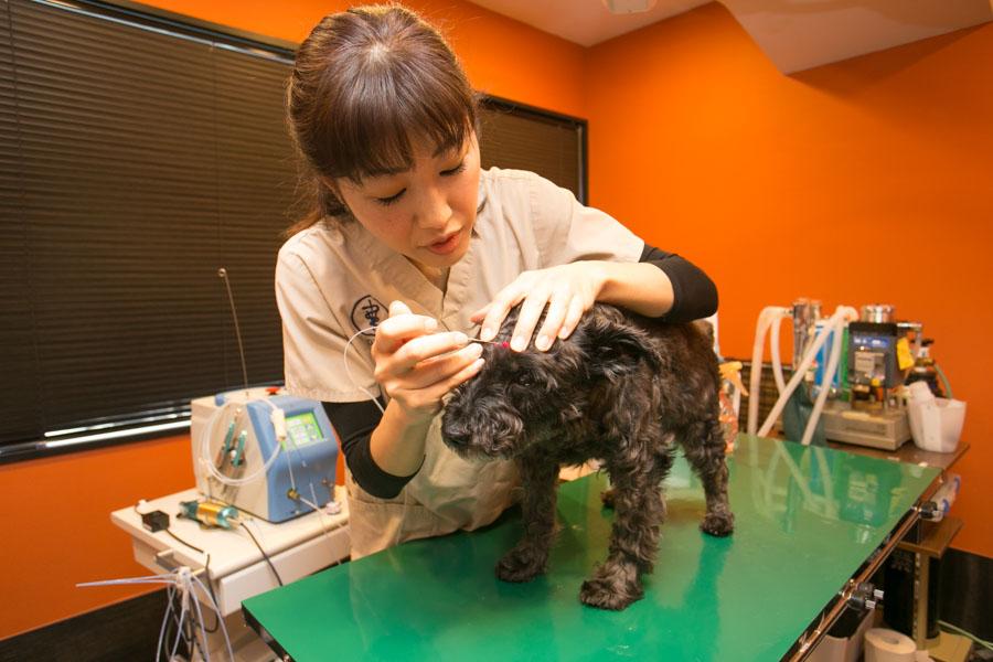 ペットの負担を軽減できるレーザー治療