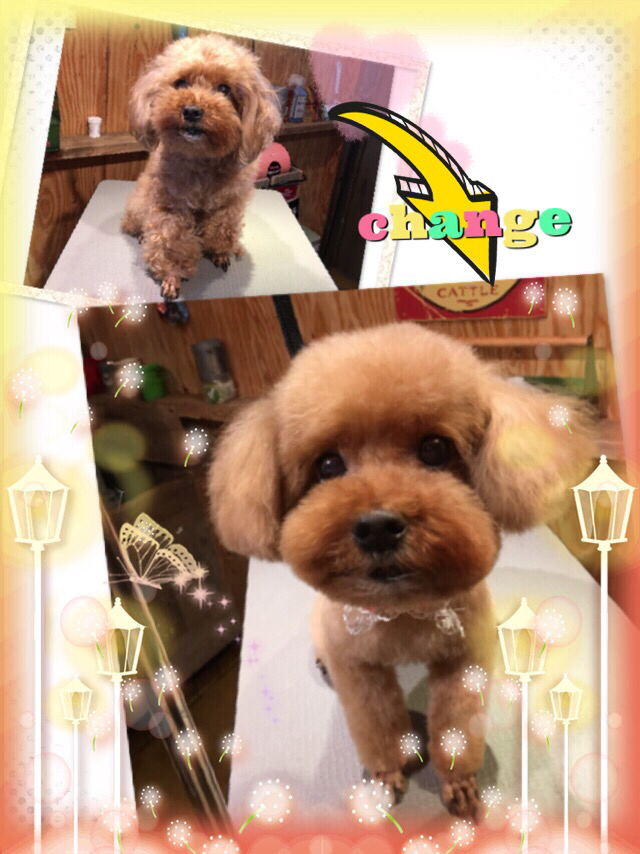 Dog salon ONE ROOM_1