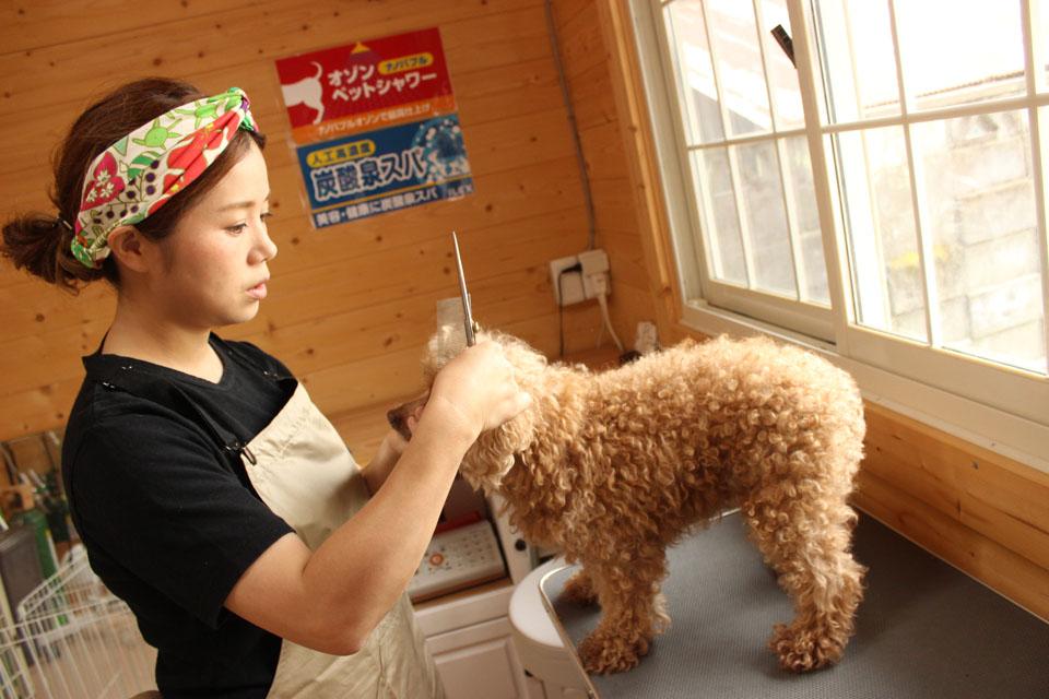 Dog salon ONE ROOM_3