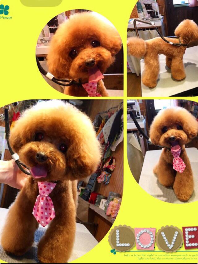 Dog salon ONE ROOM_2
