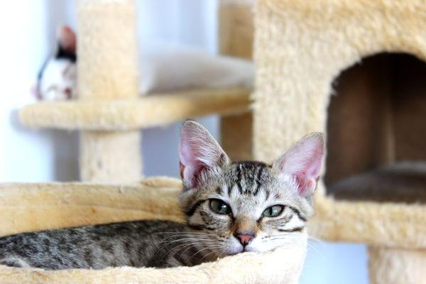 保護された沢山のネコちゃんが暮らしています